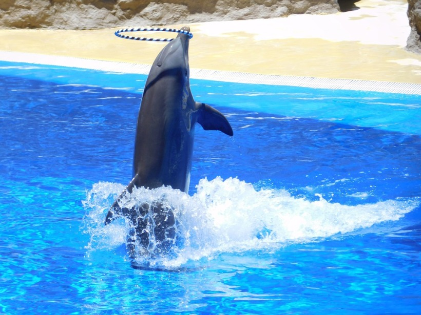 dolphin performing tricks SeaWorld captive