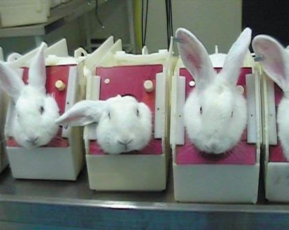 research rabbits buav cruelty experiment lab