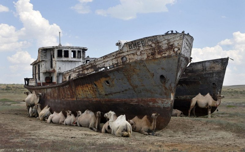 Aral sea desert camels shade heat wildlife environment ship wreck rust
