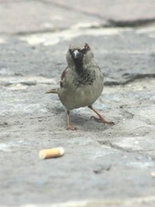 _64577339_bird