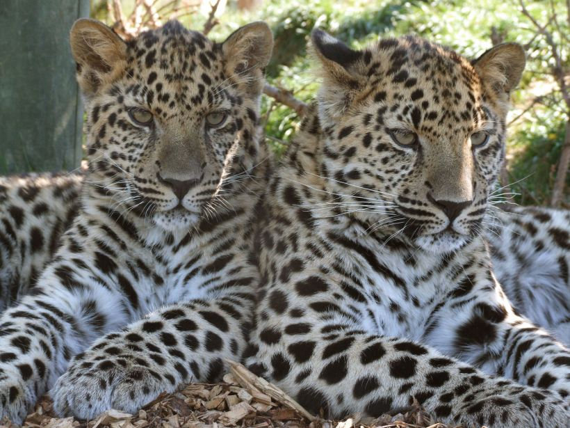 argun-anuy-by-jackiemarwellbtinternet-com-wildlife-heritage-foundation-1