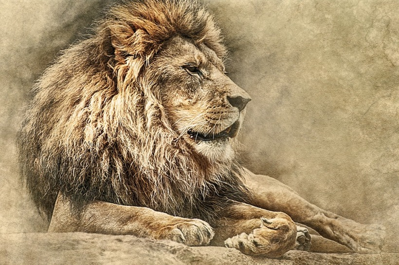 lion king of beasts big ccat trophy hunting wildlife