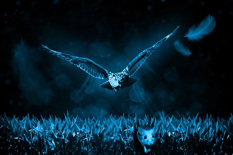owl night predator prey mouse wildlife