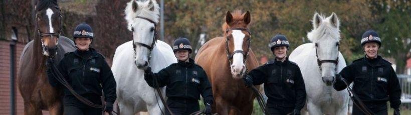 retired-police-horses-banner3-1