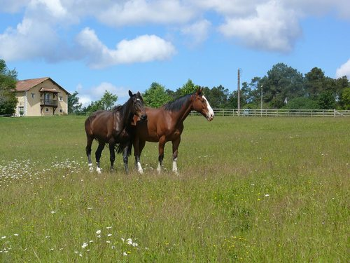 Brantôme Police Horse Sanctuary