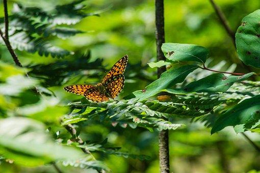butterfly-2523027__340