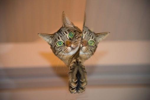 cat-697113__340