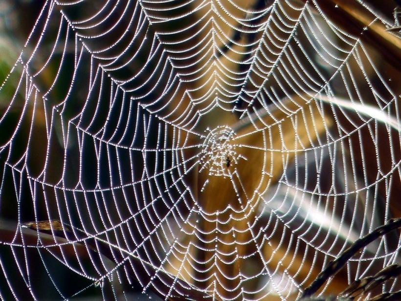 spider web arachnid arachnophobia halloween