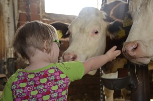 girl strokes cows love friendship connection