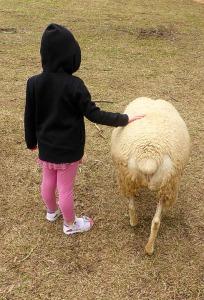 girl sheep friends friendship love gentle