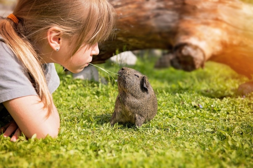 girl sharing grass guinea pig cute friendship friends love