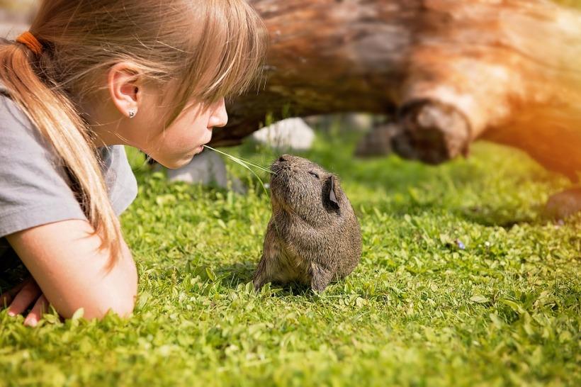 girl sharing grass guinea pig cute friendship friends love