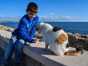 boy playing cat friends play animals love