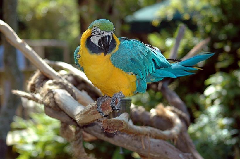 macaw-1572705_960_720.jpg