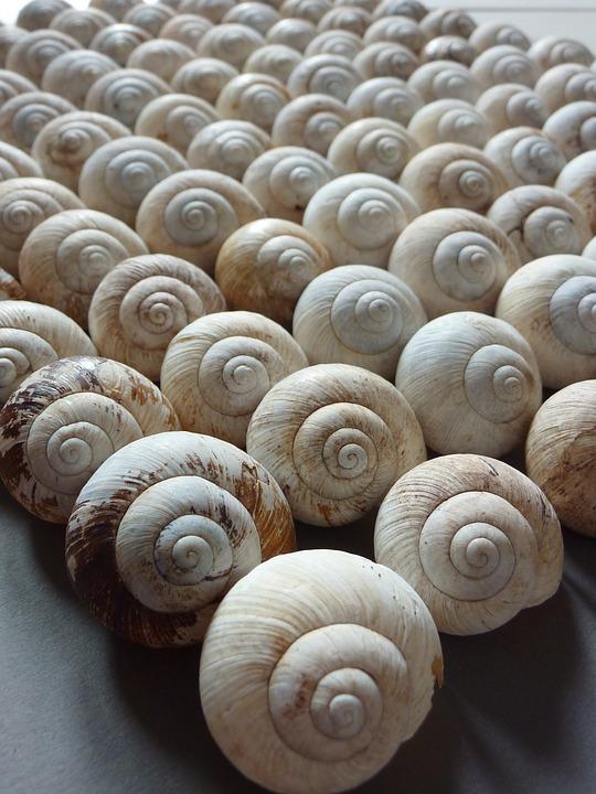 snail-1530643_960_720