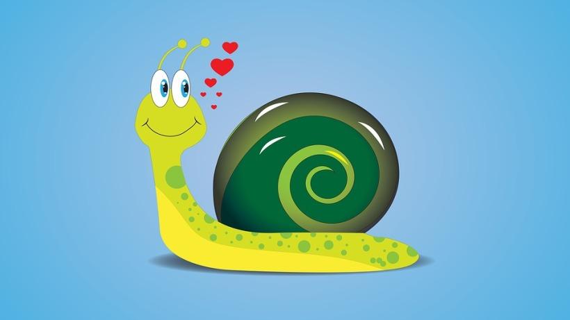 Mollusc Snail Jeremy Coil Science shellebrity