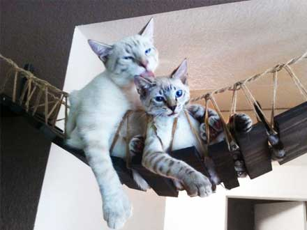 cat-bridge-furniture
