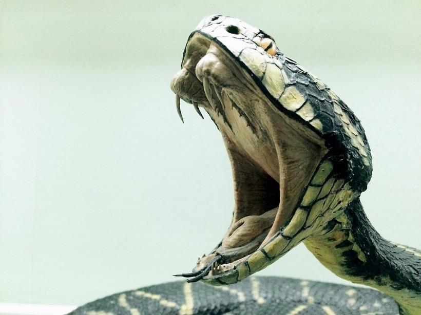 snake-1974382_960_720
