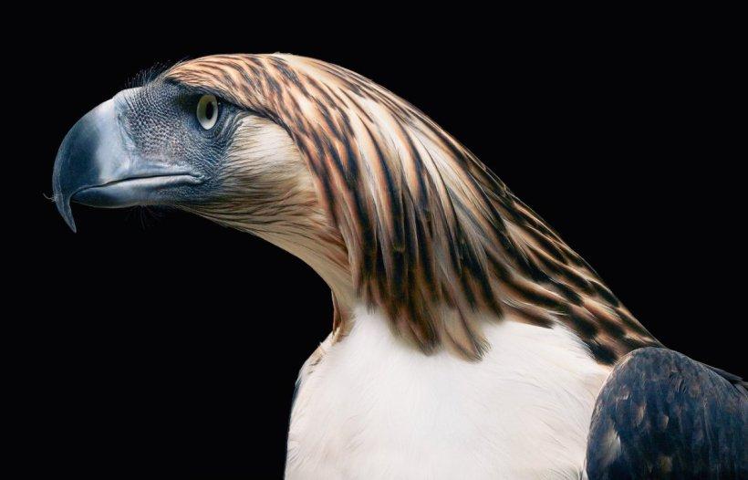 Philippine Eagle Tim Flach