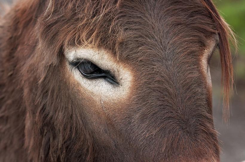 donkey-894669_960_720