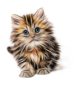 kitten cat mammal lab animal testing cute pet