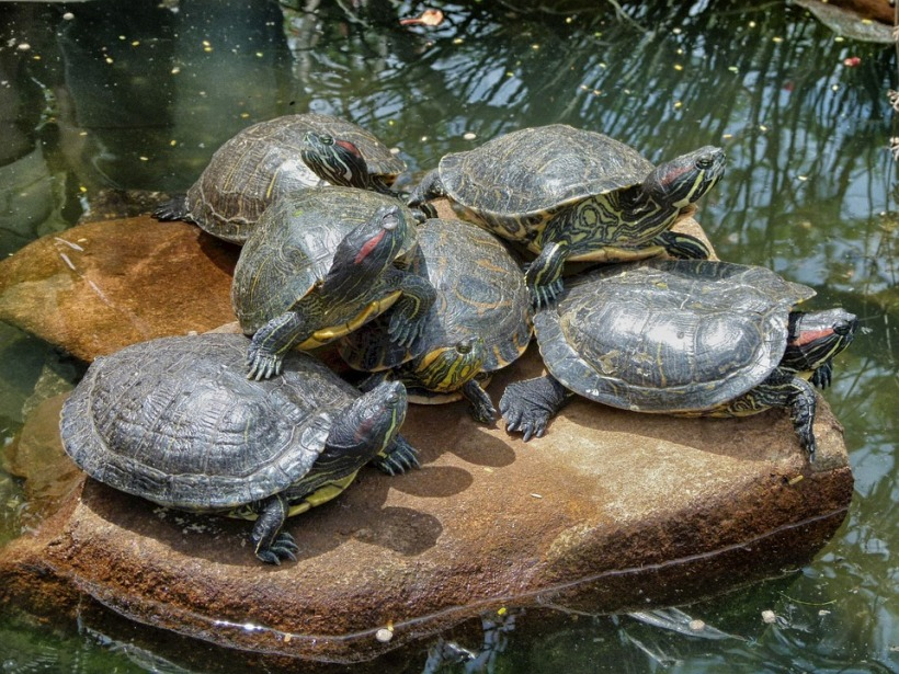 turtles-106999_960_720