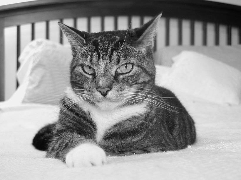 cat-2760791_960_720