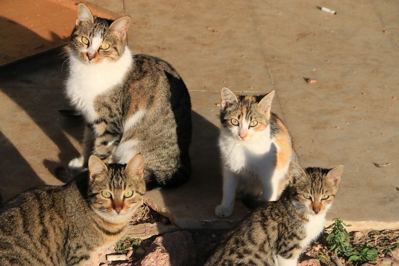 cat-2477903_960_720