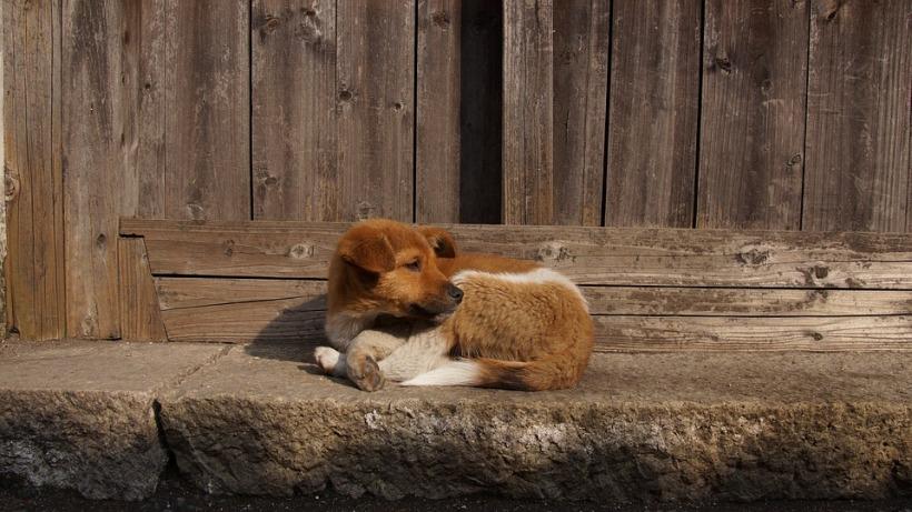 street dog puppy