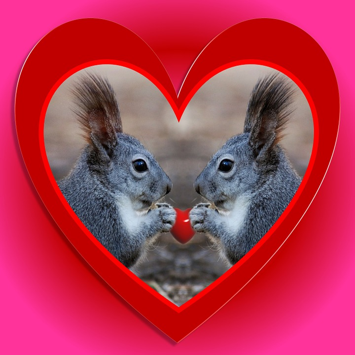 animal valentine squirrels love red heart