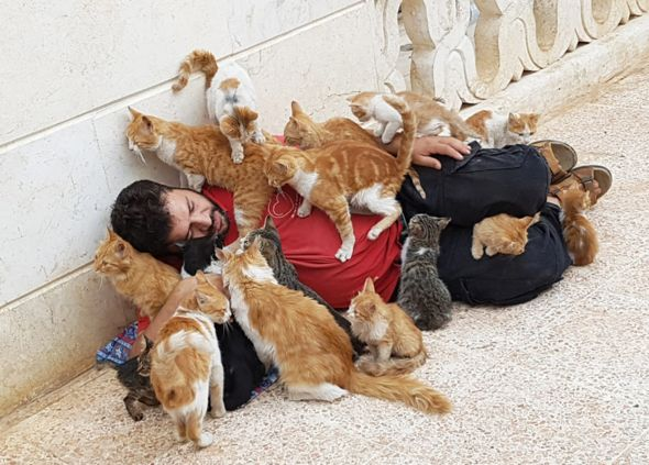 cat man of aleppo bbc