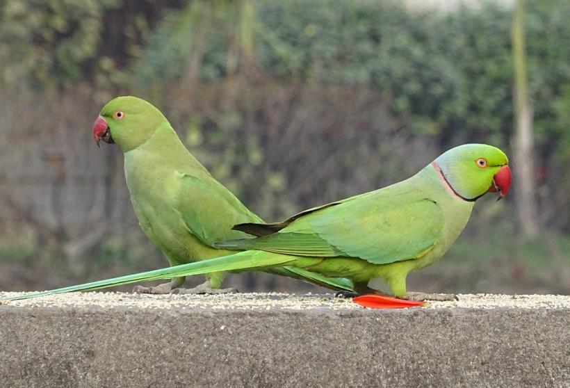 bird-2053039_960_720