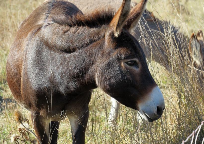 donkey-3722403_960_720