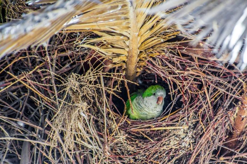 nest-1699356_960_720