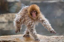 comedy wildlife photography awards 2019