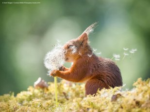 comedy wildlife photography awards 2019